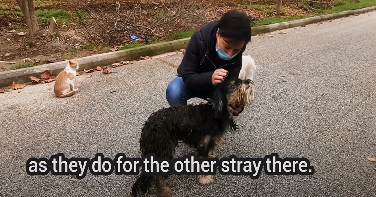 Una cucciola di cane randagia e malata trova finalmente la felicità dopo un duro passato (VIDEO)