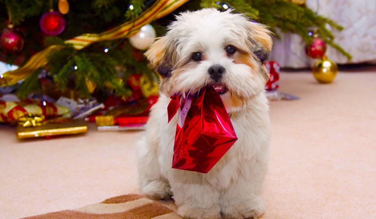 Vigilia di Natale con il cane: consigli per trascorrere questa giornata felici