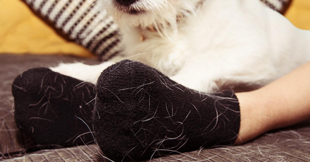 guanti pieni di peli di cane