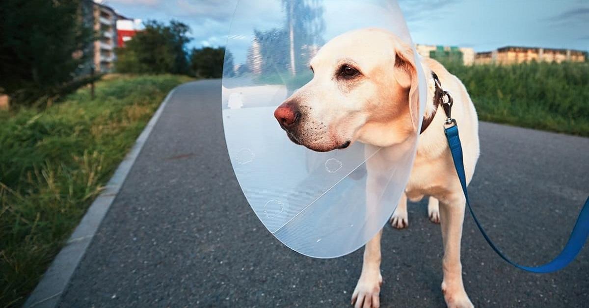 cane convalescente per strada