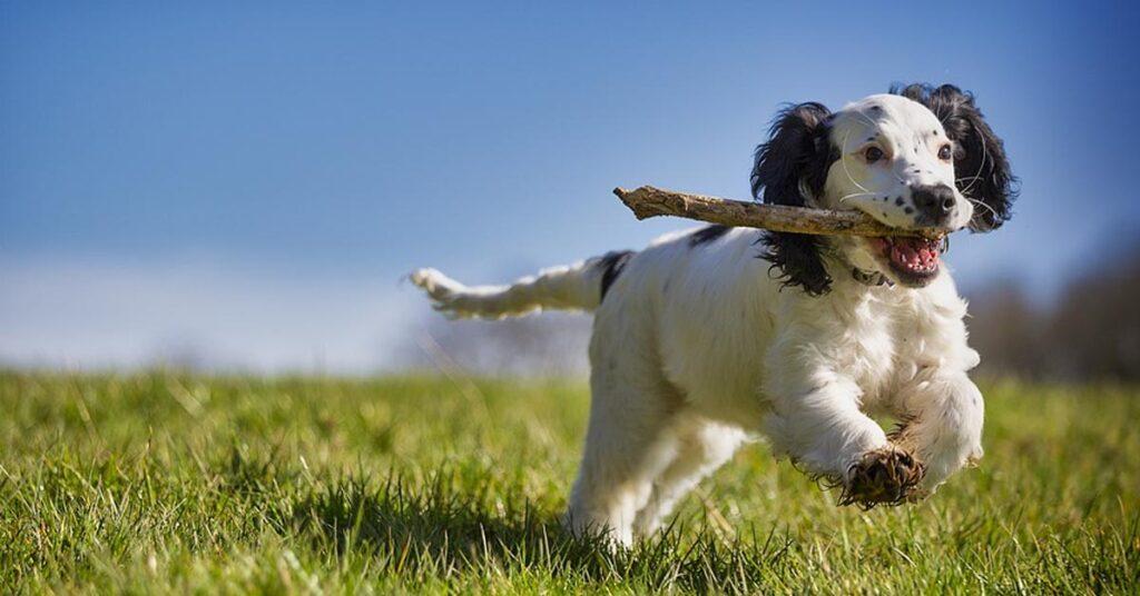 Cane che gioca con un bastone