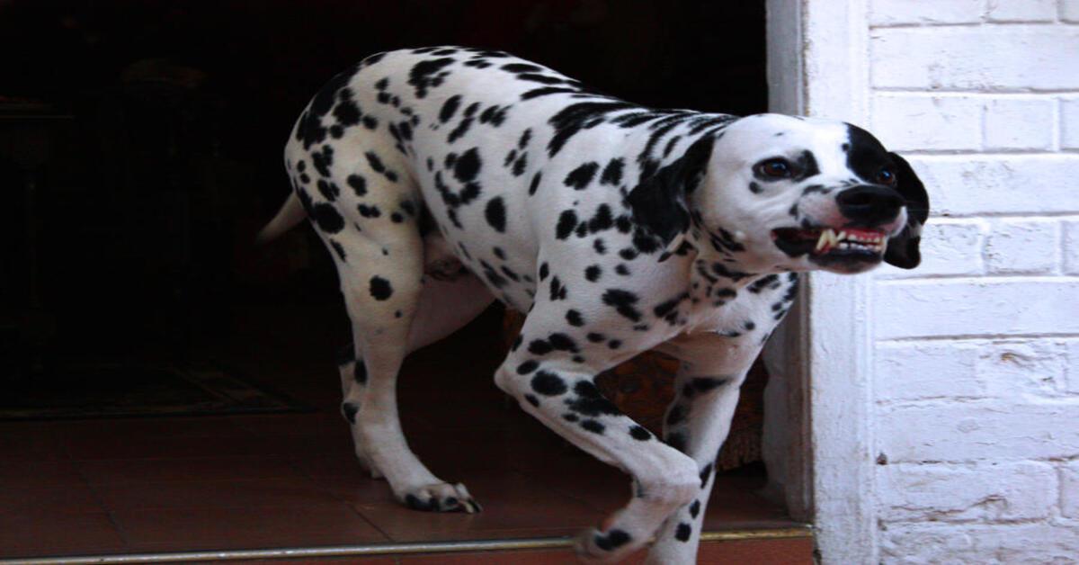 Attenzione a questi comportamenti non puoi saperlo, ma fanno diventare aggressivo il cane