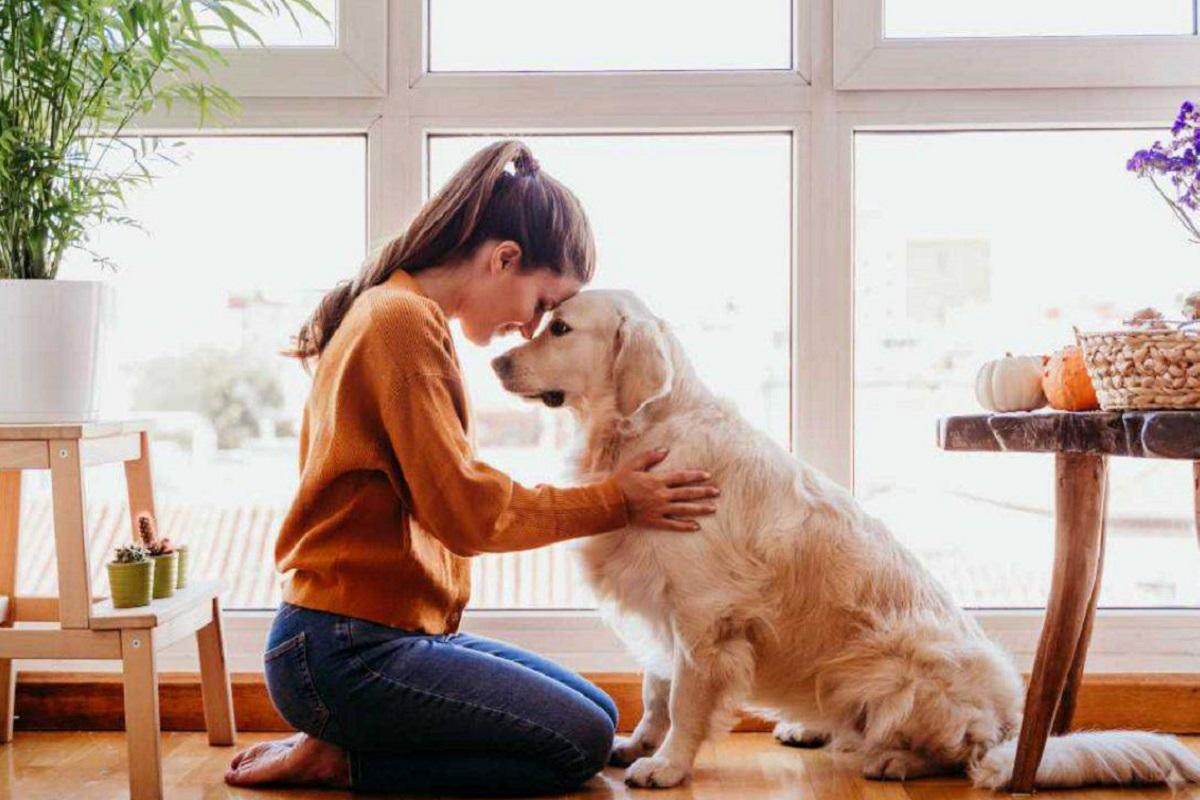 connessione tra cane e padrona