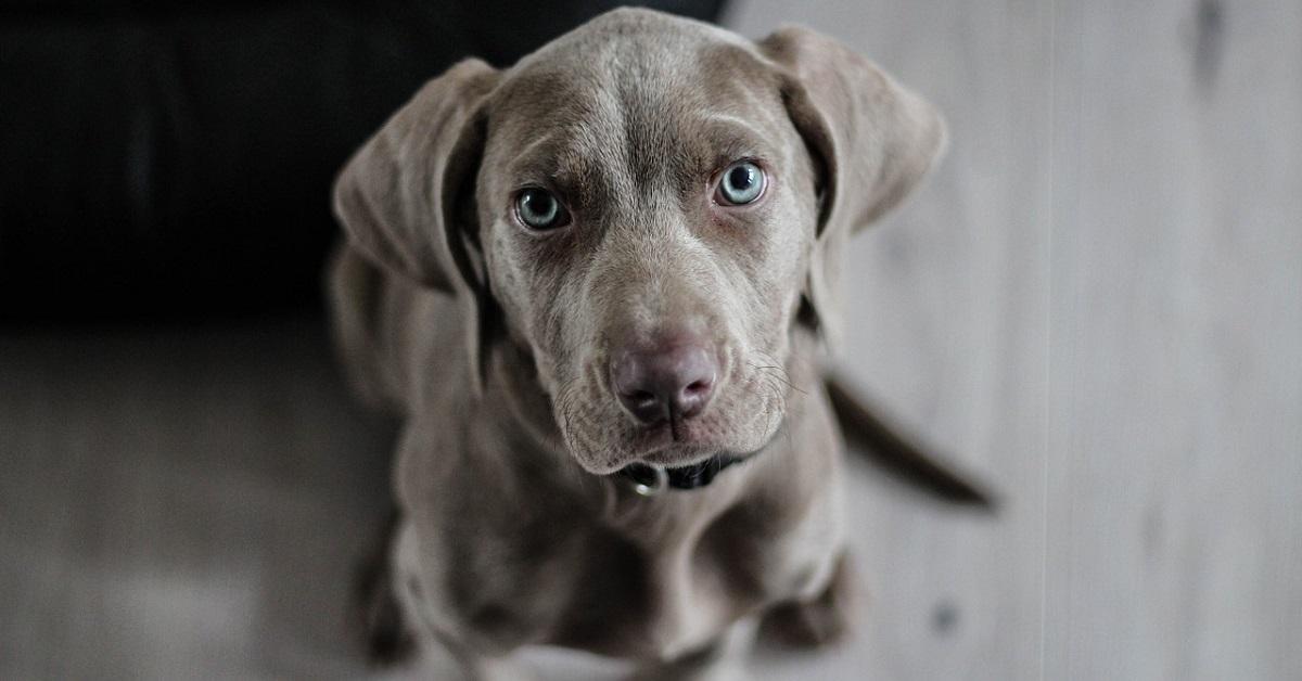 Il cucciolo di cane trovato in autostrada raggiunge la sua nuova famiglia (VIDEO)