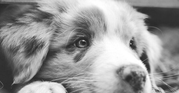 Cucciolo di cane trovato in autostrada raggiunge la sua nuova famiglia