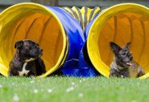 cani nel tunnel