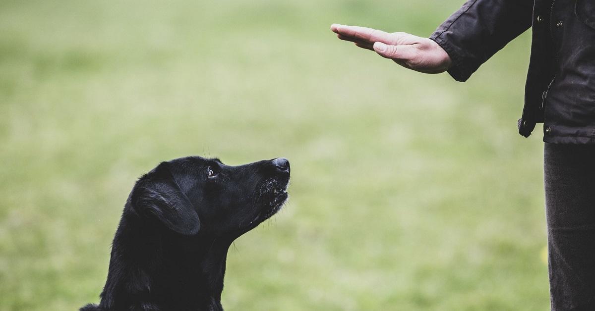 Come si fa a diventare addestratore di cani? Una guida passo per passo