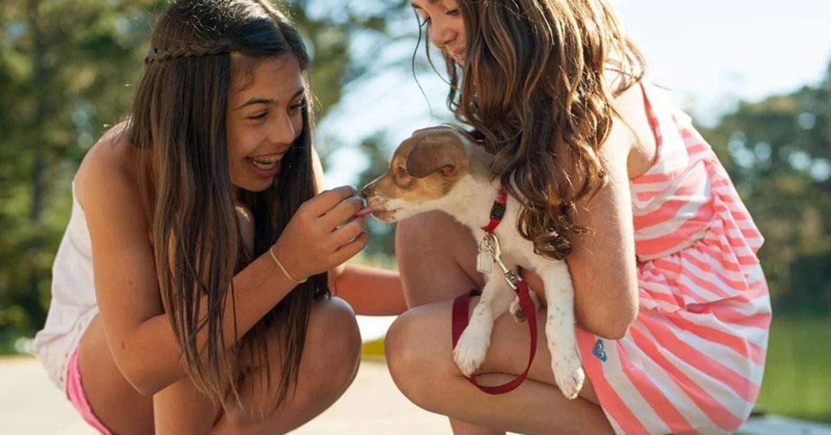 Ecco tutti i trucchi per far avvicinare il bambino al cane: è facile se sai come farlo