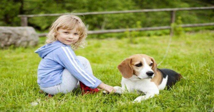 Ecco tutti i trucchi per far avvicinare il bambino al cane è facile se sai come farlo