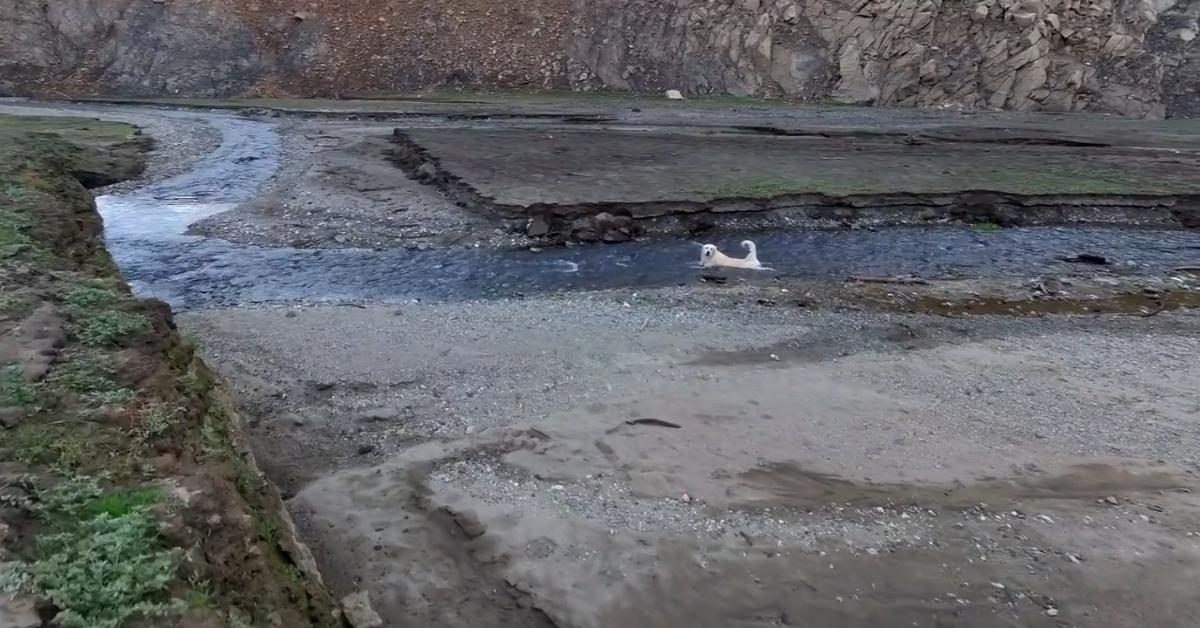 Golden Retriever va al fiume in compagnia dei padroni (VIDEO)