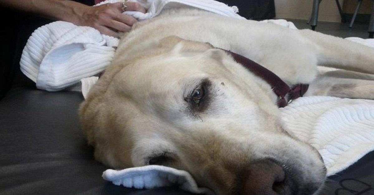 cane con toxoplasmosi