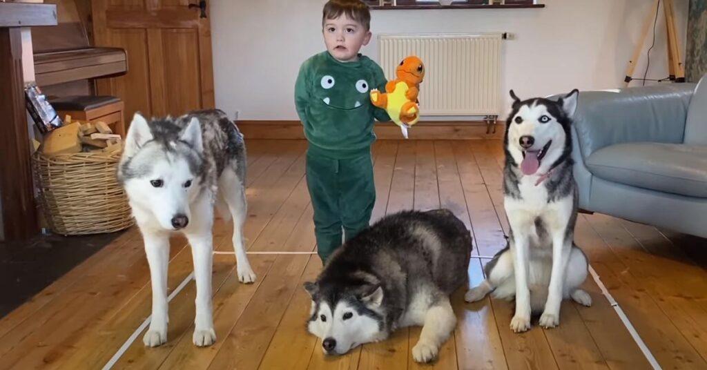Tre Husky con un bambino