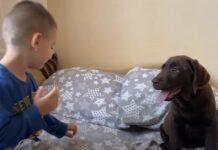 Cucciolo di Labrador con un bambino