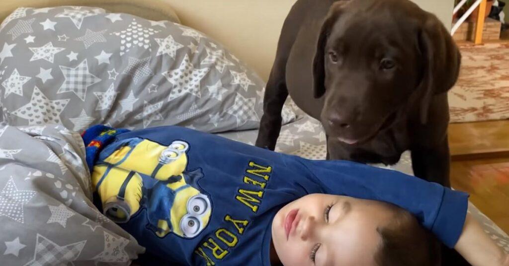 Il cucciolo di Labrador si trasforma nella sveglia più tenera del mondo per il suo amico bambino (video)