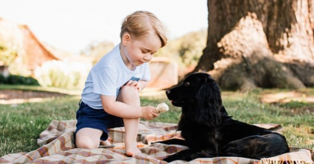Royal Family cucciolo Cocker Spaniel video