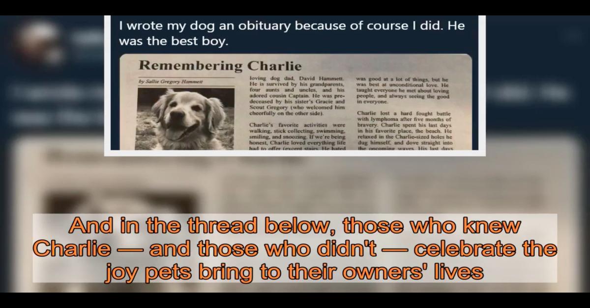 Una ragazza scrive un commovente necrologio per il suo Golden Retriever Charlie (VIDEO)