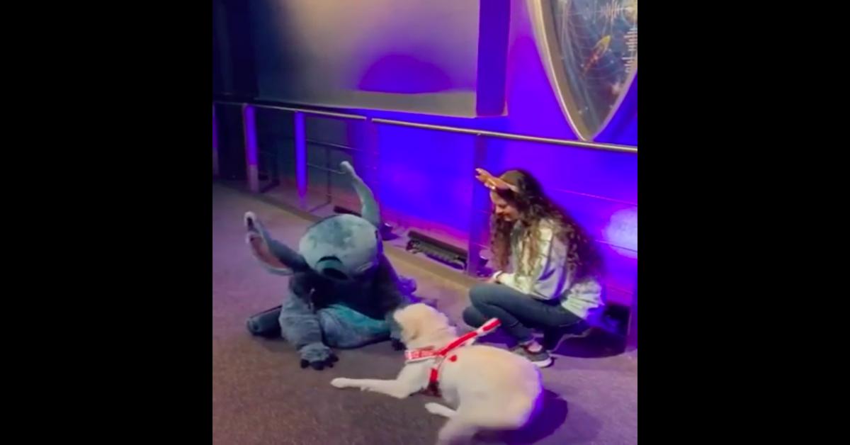 Cane felice conosce personaggio Disney