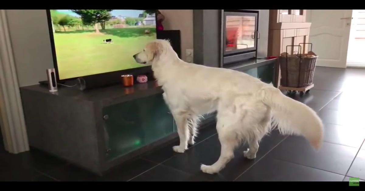 Maya guarda un cane in tv