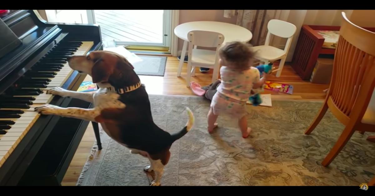 cane pianista con bambina che balla