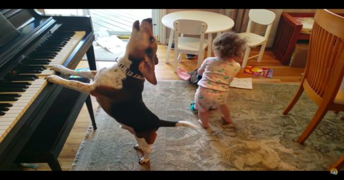 Beagle suona piano e bimba balla
