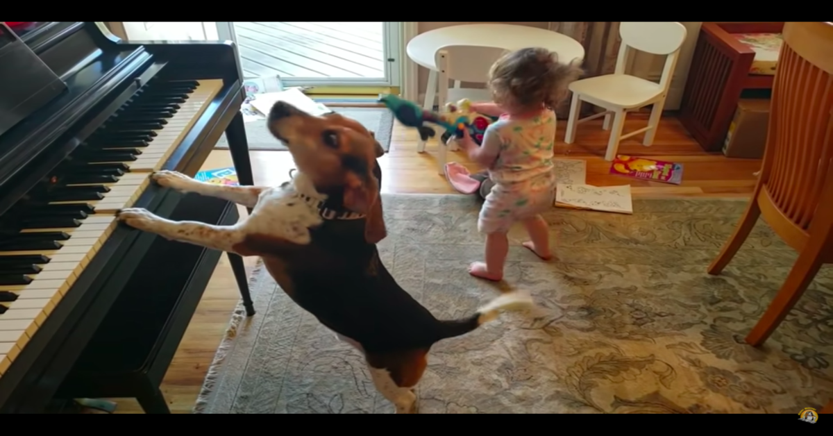 cane suona il piano e canta con una bambina