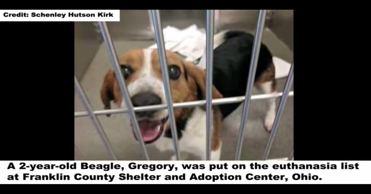 Beagle in attesa dell'eutanasia