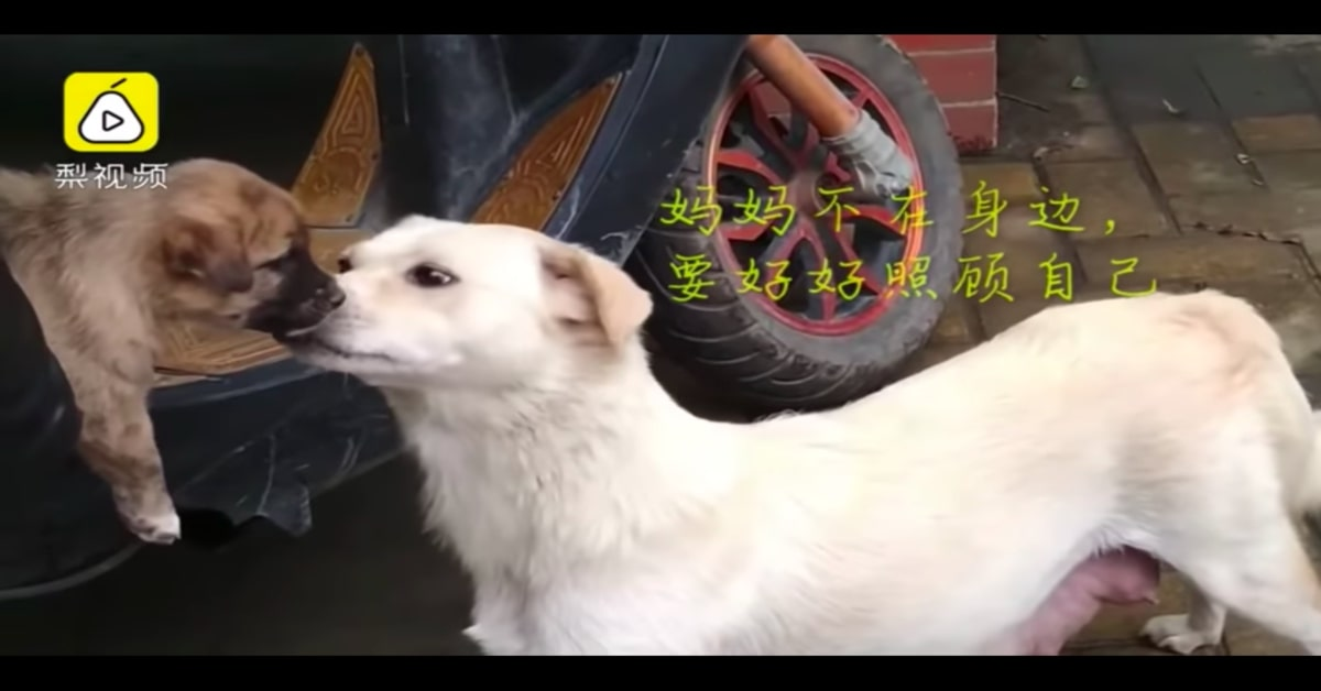 mamma saluta il suo cucciolo che viene adottato
