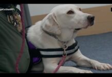 Daisy cane pet therapy
