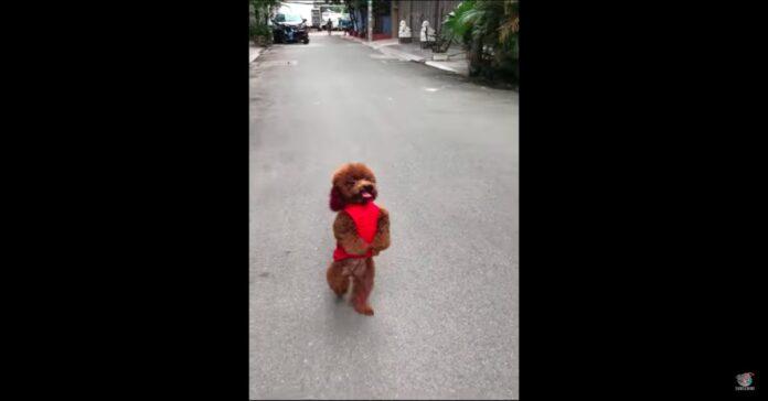 cane cammina in piedi