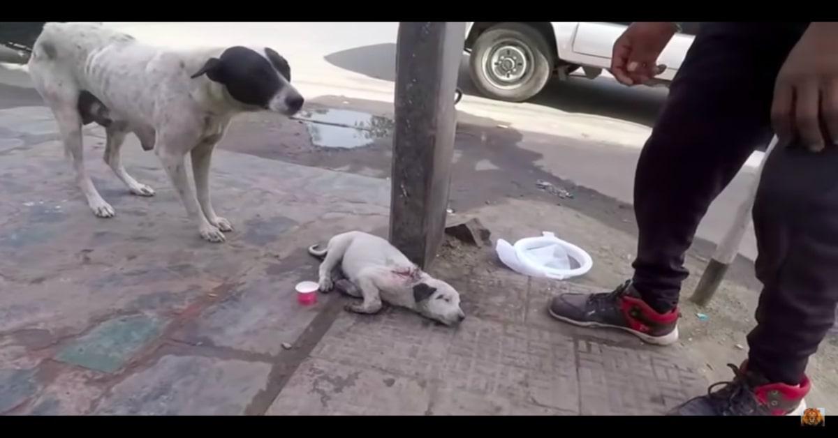 cagnolina mostra al veterinario il suo piccolo ferito