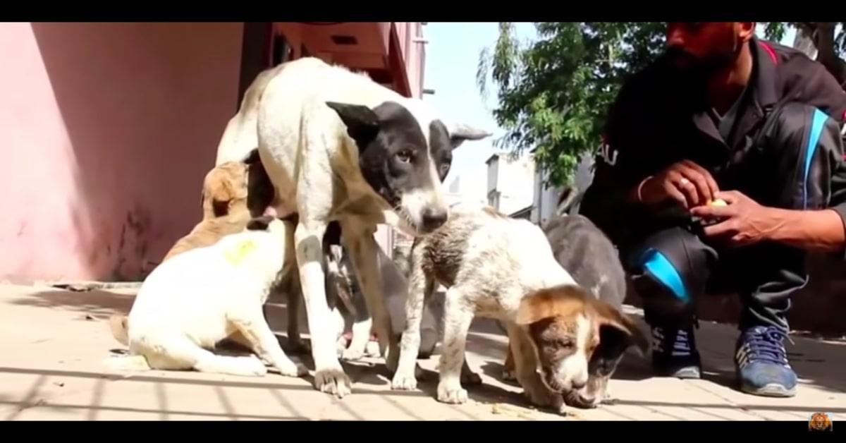 cucciolo ferito si riunisce alla mamma e ai fratellini