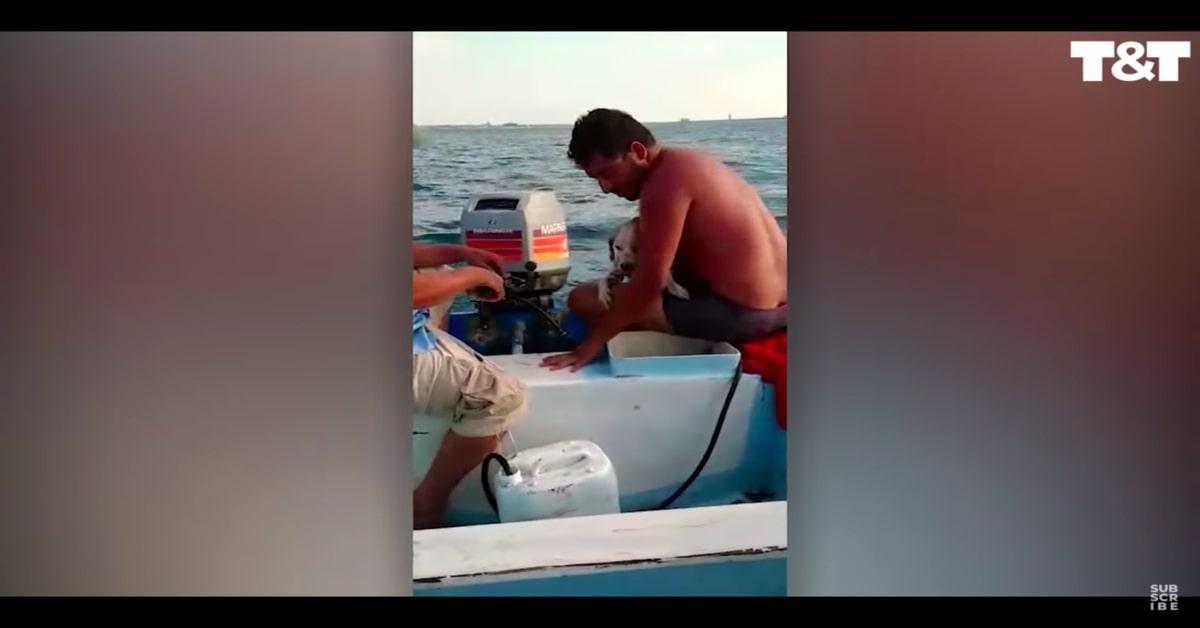cane salvato dai pescatori al largo