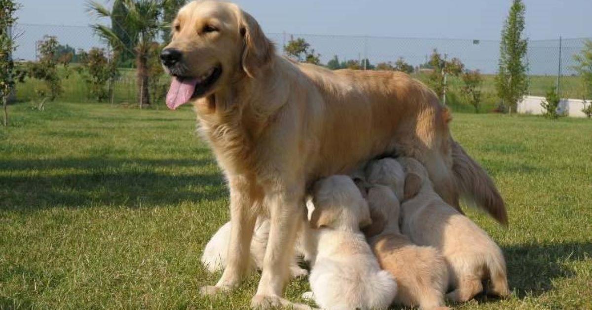 sono nati i cagnolini