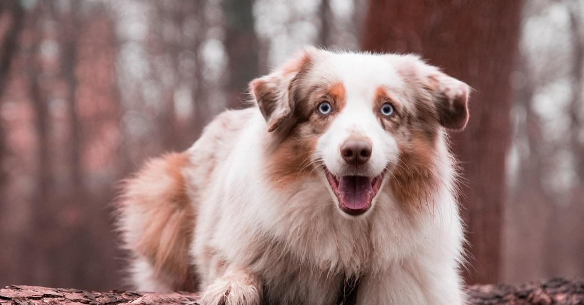 telecamera nascosta svela cosa fa il cucciolo di cane quando è a casa da solo