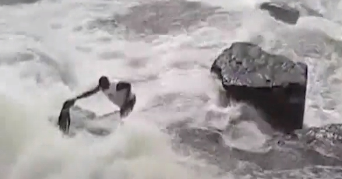 Un eroico giardiniere salva un cagnolino caduto in una diga (VIDEO)