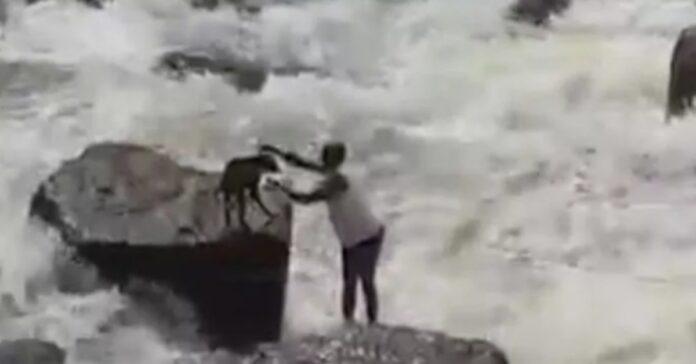 giardiniere cagnolino video