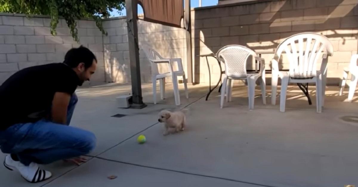 ragazzo che aveva paura di prendere un cucciolo di cane