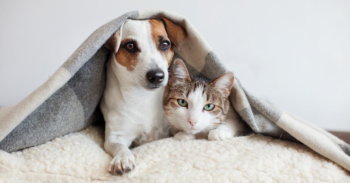 cane e gatto sotto la coperta