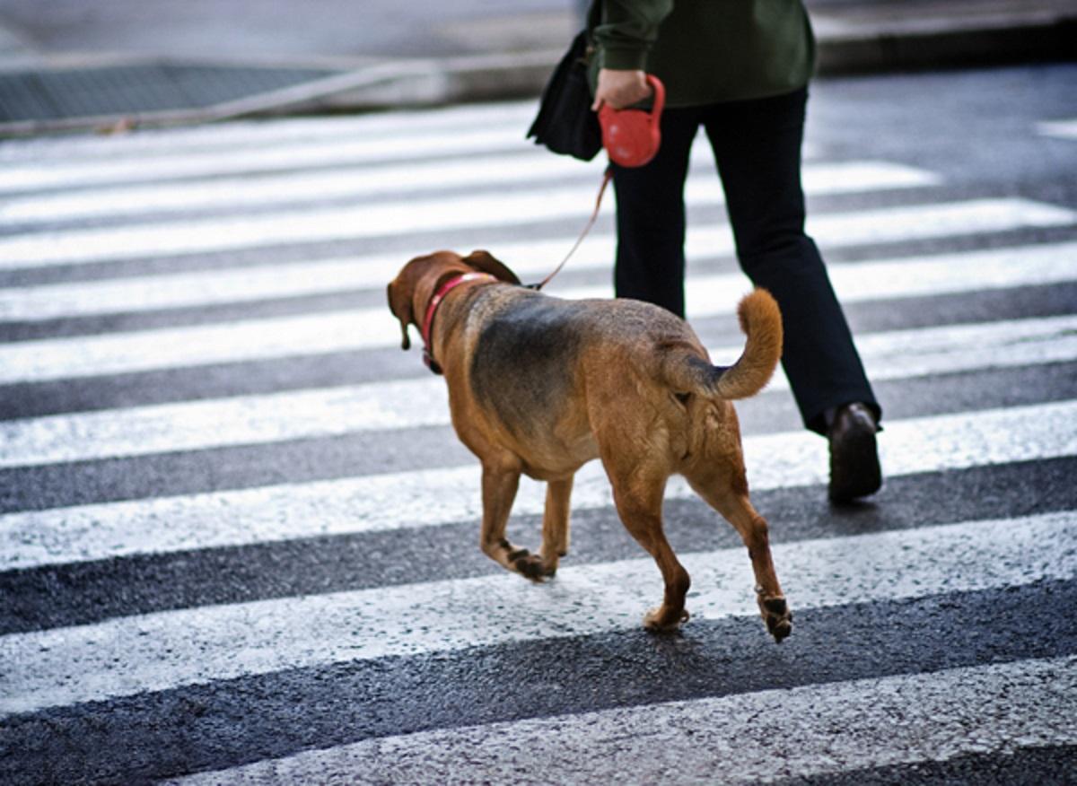 cucciolo cane cammina al fianco proprietario