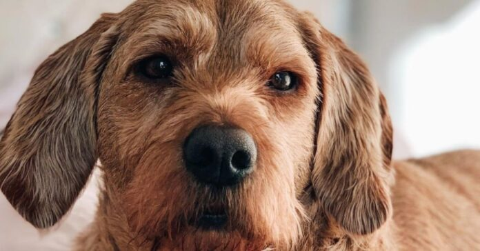 cane occhi simpatici