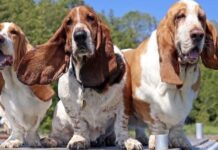 gruppo di cagnoloni