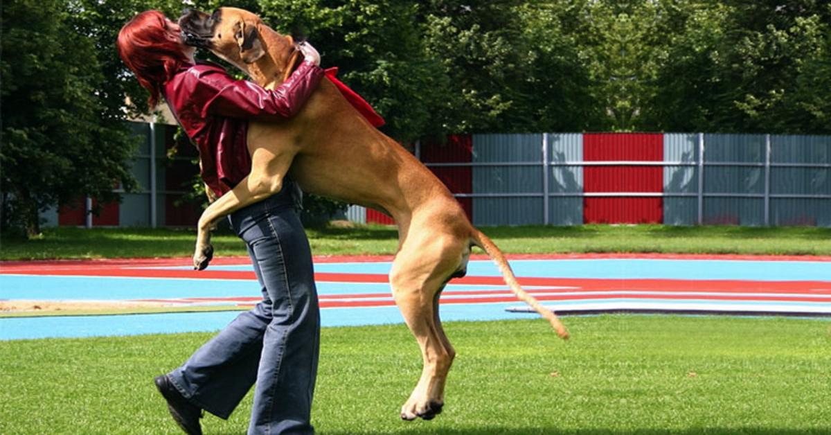 cane fa le feste a una ragazza