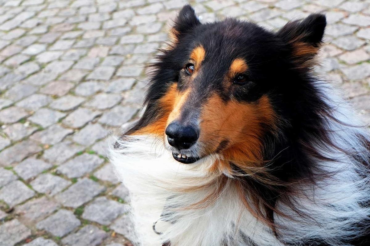 Cane mangia il dentifricio: che rischi corre?