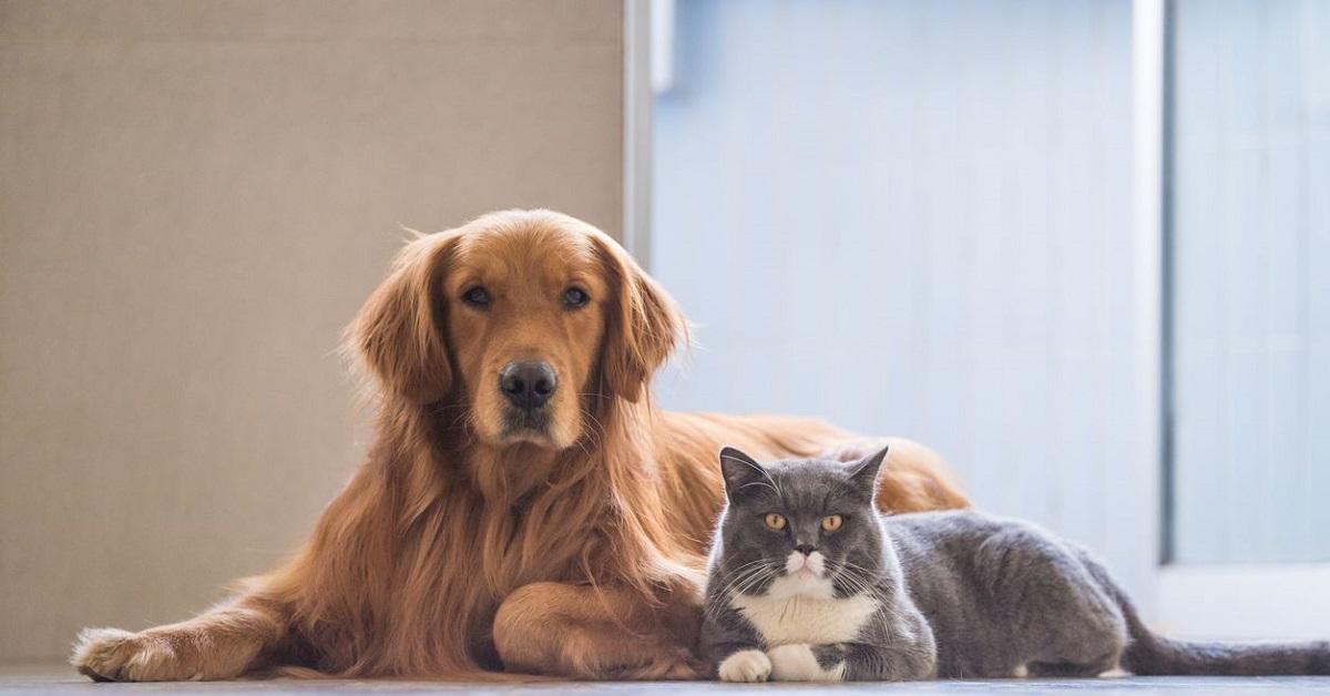 gatto e cane sul pavimento