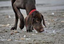 cane in mezzo al fango