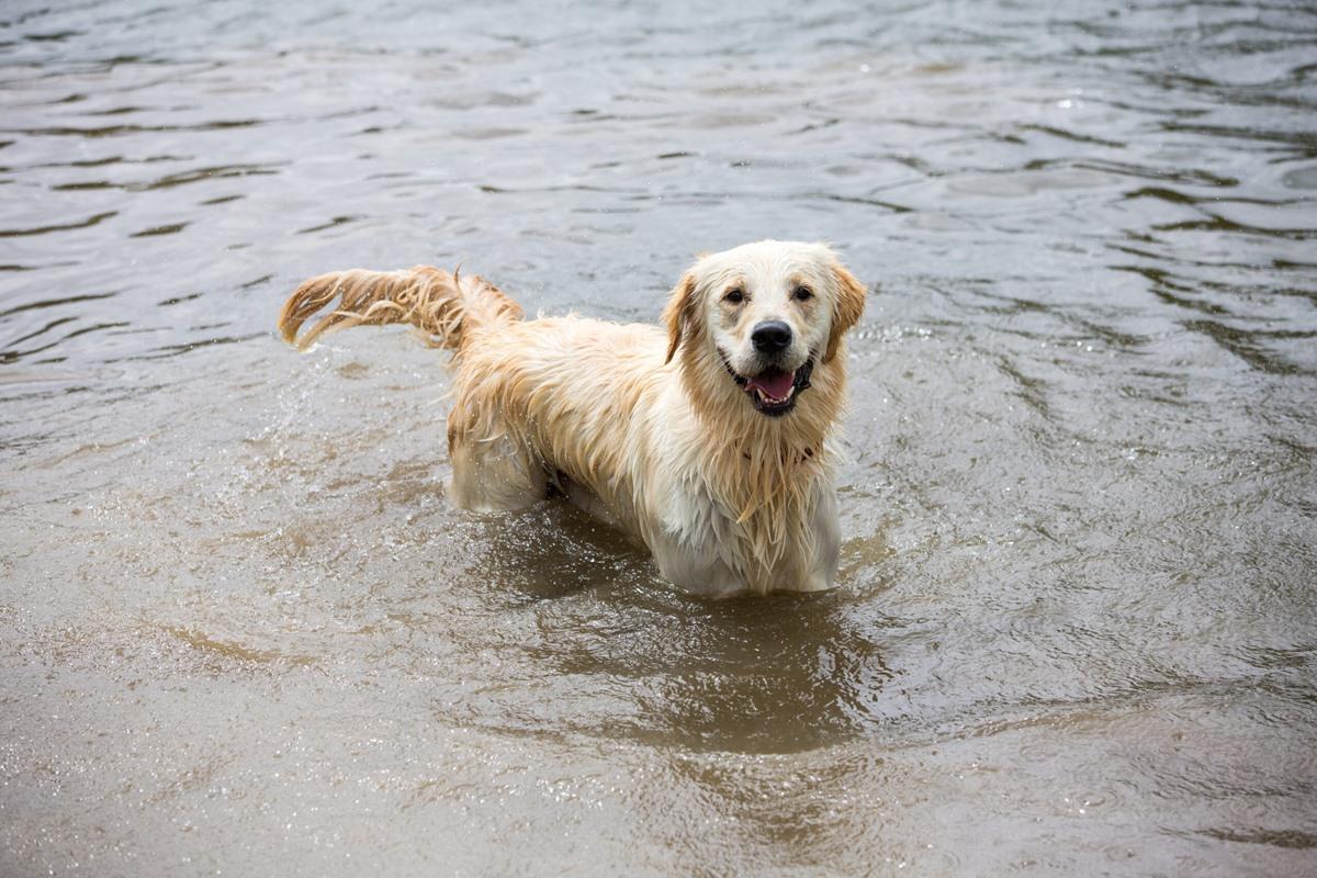 Il cane non vuole uscire quando piove: che cosa fare?