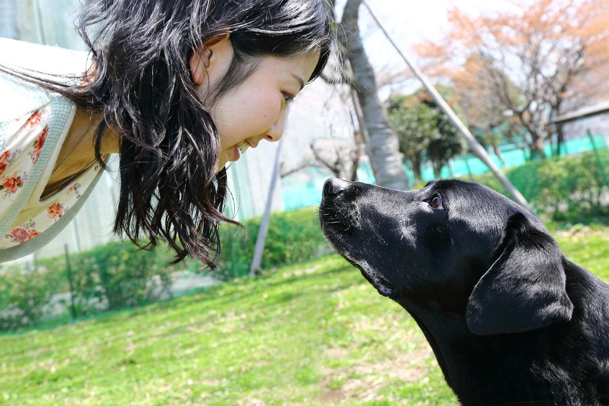 Il cane può decidere di ignorarti oppure è solo una tua impressione?