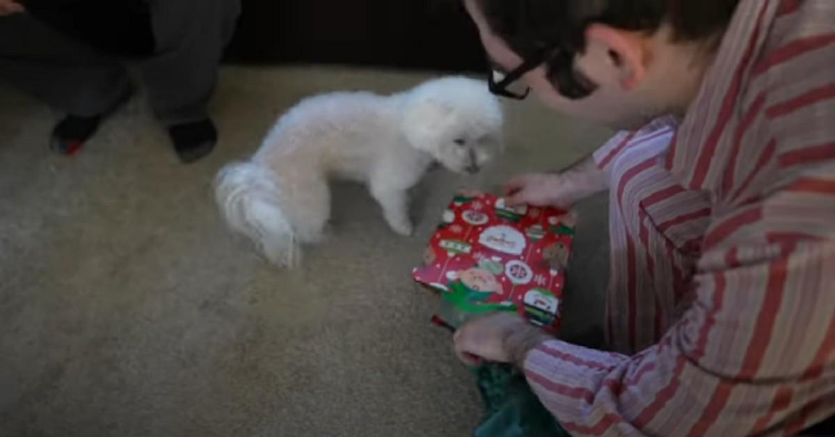 cane regalo natale