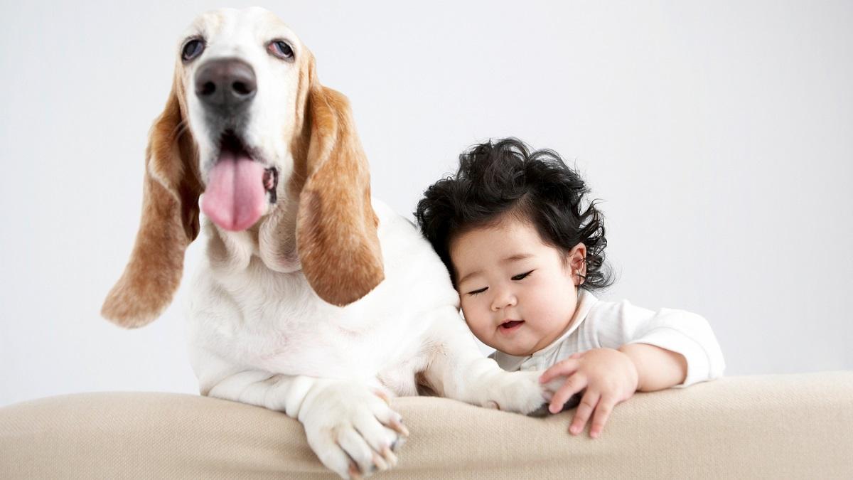 cane e bambino su un divano