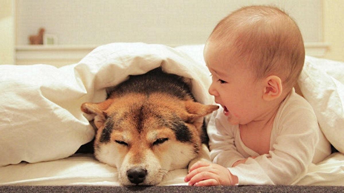 cane con un neonato